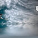 Heron and the Moon by Kimberly Palmer