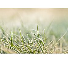 frost on grass Photographic Print