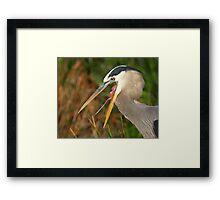 Great Blue Heron Exposure Framed Print