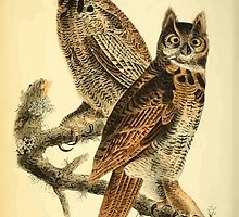 James Audubon Vector Rebuild - The Birds of America - From Drawings Made in the United States and Their Territories V 1-7 1840 - Great Horned Owl by wetdryvac