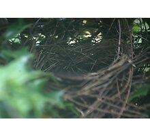 Update on Nest Photographic Print