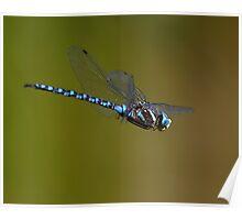 Dragonfly in Flight Poster