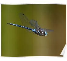 Dragonfly in Flight Poster