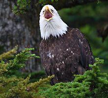 Eagle Screaming by William C. Gladish