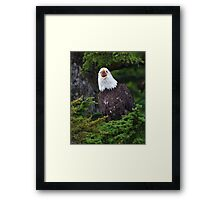 Eagle Screaming Framed Print