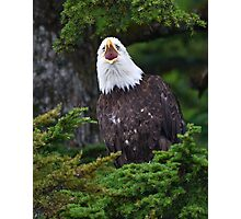 Eagle Screaming Photographic Print