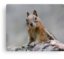 Ground Squirrel on Stage Canvas Print