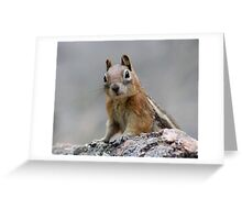 Ground Squirrel on Stage Greeting Card