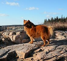 'Cindy on the Rocks' by Scott Bricker
