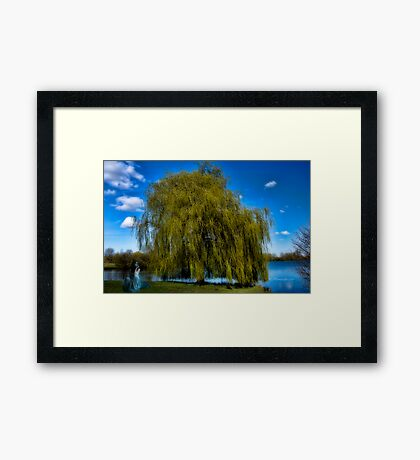weepy willow daydreamer~ Framed Print