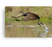 Limpkin Takeoff Canvas Print