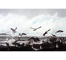 Gulls in Flight Photographic Print