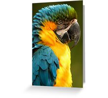 Macaw with Ruffled Feathers Greeting Card