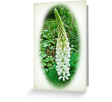 White Lupine Flowers Greeting Card