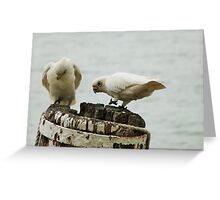 'WE'RE MAKING A GOOD HOLE! Pair of Corella's, Mannum. Greeting Card