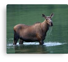 Moose & Emerald Pool Canvas Print