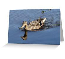 Female Mallard Hen Swimming on the Concord River Greeting Card