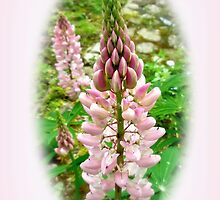 Pink Lupin Flowers by MotherNature