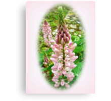 Pink Lupin Flowers Canvas Print