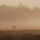 Cycling to work on a misty heath by jchanders