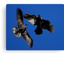 Raven Dance Canvas Print