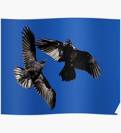 Raven Dance Poster
