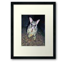 Arnie Possumnegger Framed Print