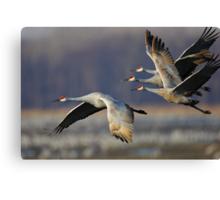Sandhill Cranes in Flight Canvas Print