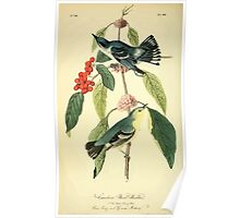 James Audubon Vector Rebuild - The Birds of America - From Drawings Made in the United States and Their Territories V 1-7 1840 - Carulean Wood Warbler Poster