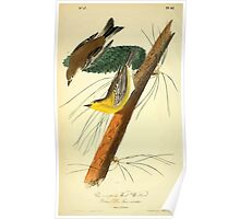 James Audubon Vector Rebuild - The Birds of America - From Drawings Made in the United States and Their Territories V 1-7 1840 - Pine Creeping Wood Warbler Poster