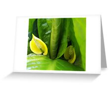 Skunk Cabbage Greeting Card