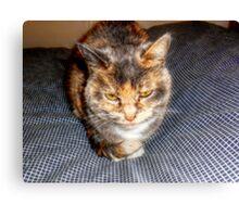 A Cat Named Peaches Canvas Print