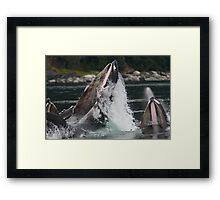 Humpback Whales Breaching Framed Print
