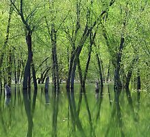 Tree Reflections by lorilee