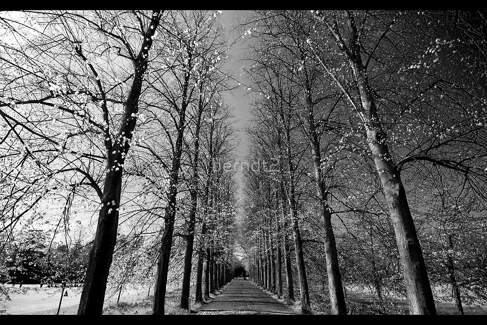 The Dark and The Light by berndt2