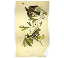 James Audubon Vector Rebuild - The Birds of America - From Drawings Made in the United States and Their Territories V 1-7 1840 - Small Green Crested Flycatcher Poster