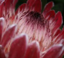 Purple Fuzzies by Kellea Croft