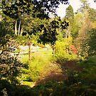 The secret garden by Finbarr Reilly