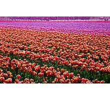 Color Carpet Photographic Print