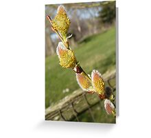 Willow Greeting Card