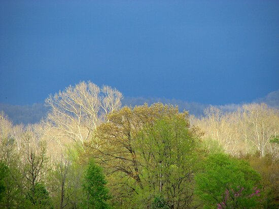~Pastels Of Spring Light~ by NatureGreeting Cards ©ccwri