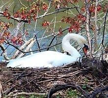 Mother Swan by Cynthia48