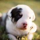 Dandy lil pup by Hollie Nass
