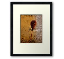 Her solid fade Framed Print