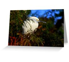 There's an Egret in those pines Greeting Card