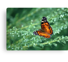 A simple beauty Canvas Print