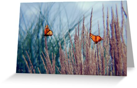 Fluttering on by by LjMaxx