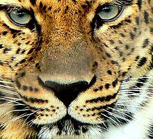 In the eyes of an Amur by LjMaxx