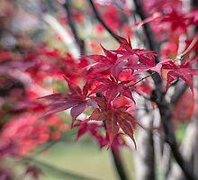 Autumn Red by yolanda