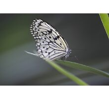 Black & White Butterfly 2 Photographic Print